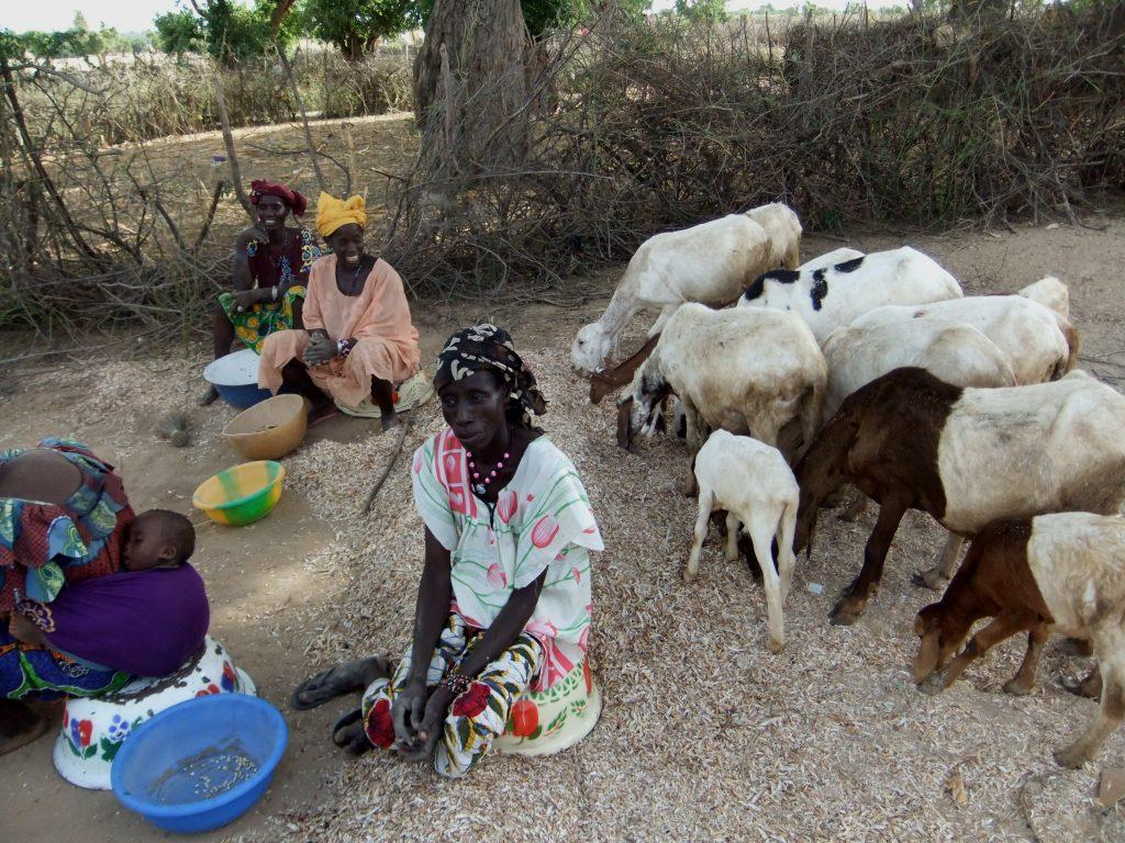 voeding voor mens & dier