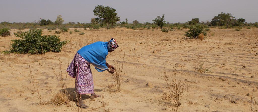 bodemerosie vraagt meer beplanting